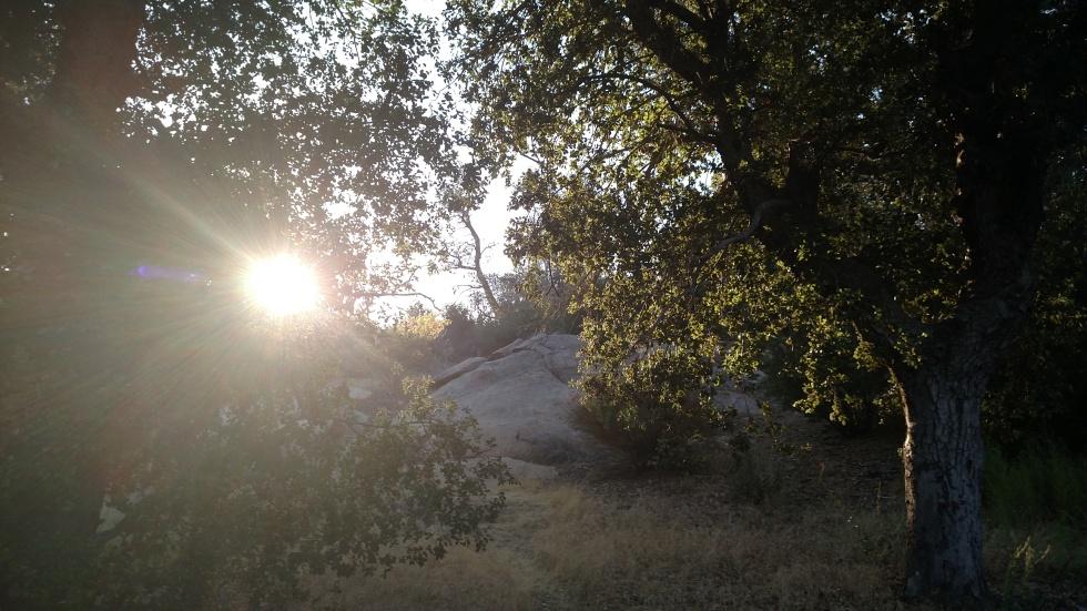 Pine Ridge Trail, Cuyamaca Rancho State Park