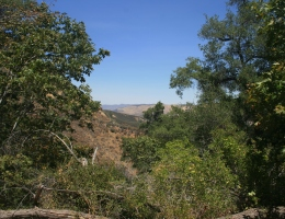 Willow Spring Trail, Figueroa Mountain Recreation Area, Santa Barbara, CA