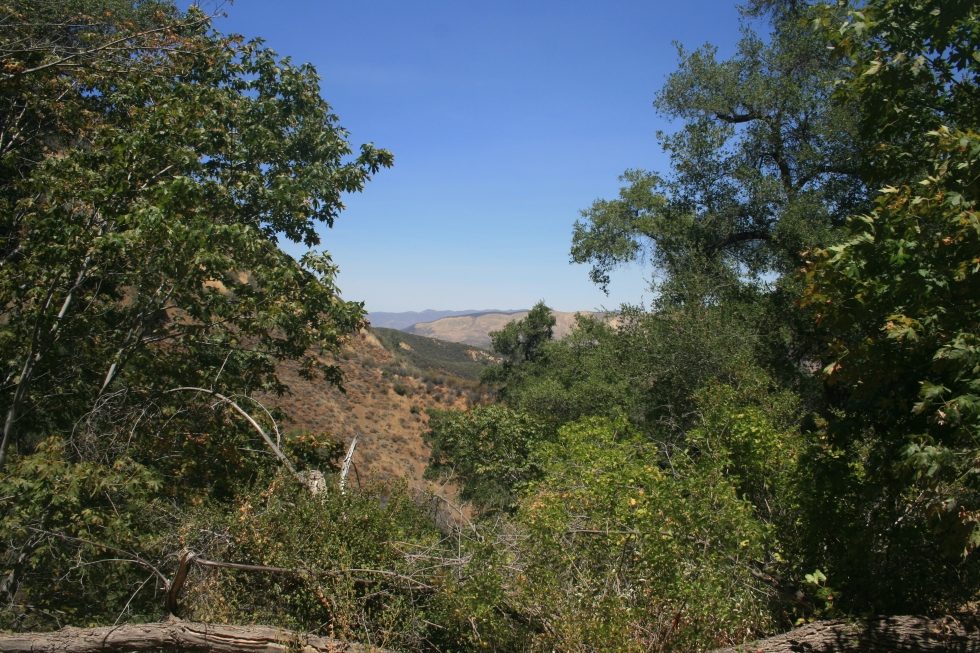 Willow Spring Trail, Figueroa Mountain Recreation Area, Santa Barbara, CA