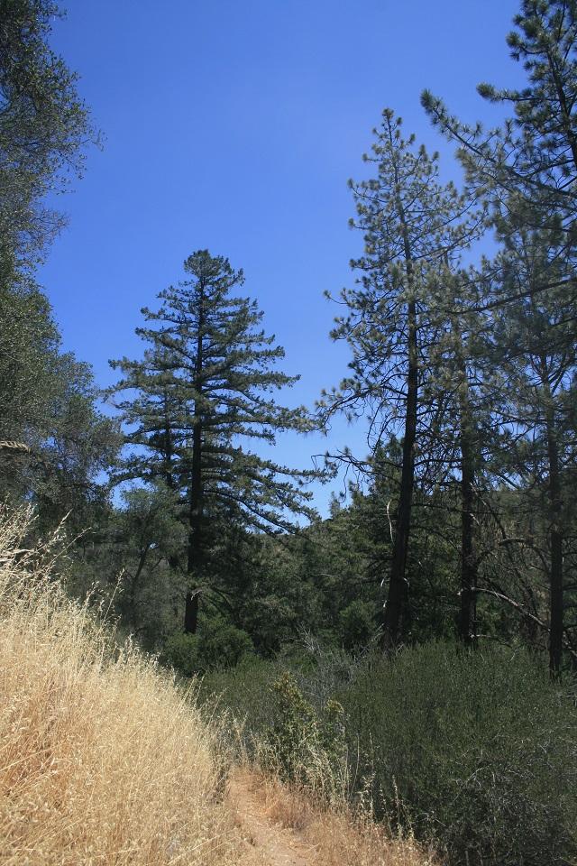 Willow Spur Trail, Figueroa Mountain Recreation Area, Santa Barbara, CA