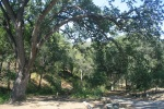 Davy Brown Campground, Santa Barbara County, CA