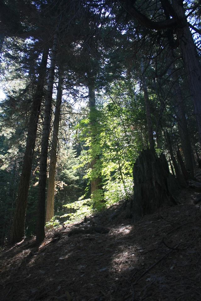 Dogwood Trail, Rimforest, CA