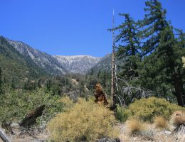 Mine Gulch, Angeles National Forest