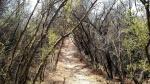 Nichoals Flat Trail, Malibu, CA