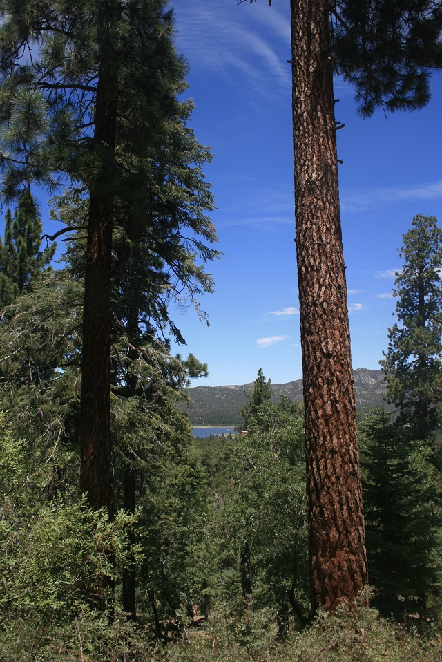 Town Trail, Big Bear Lake, CA