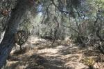 Del Mar Mesa Preserve, San Diego, CA