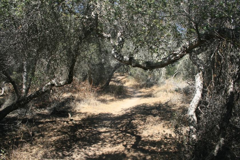 Tunnel 4 Trail, Del Mar Mesa Preserve, San Diego, CA