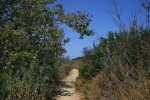 Lagoon Trail, Gonzalez Canyon Open Space, San Diego, CA