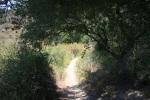 Gonzalez Canyon, San Diego County, CA