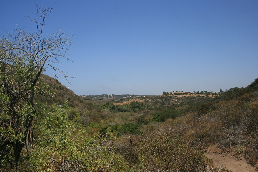 Gonzalez Canyon Open Space, San Diego, CA