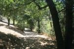 Black oaks, Lake Gregory, Crestline, CA
