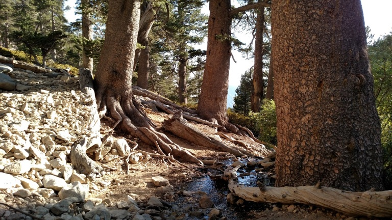 High Creek, San Gorgonio Mountain