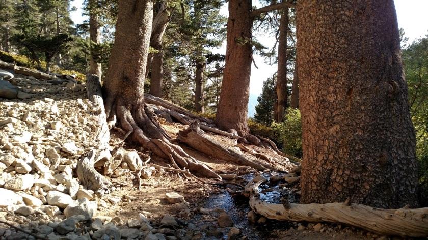 High Creek, San Gorgonio Mountain