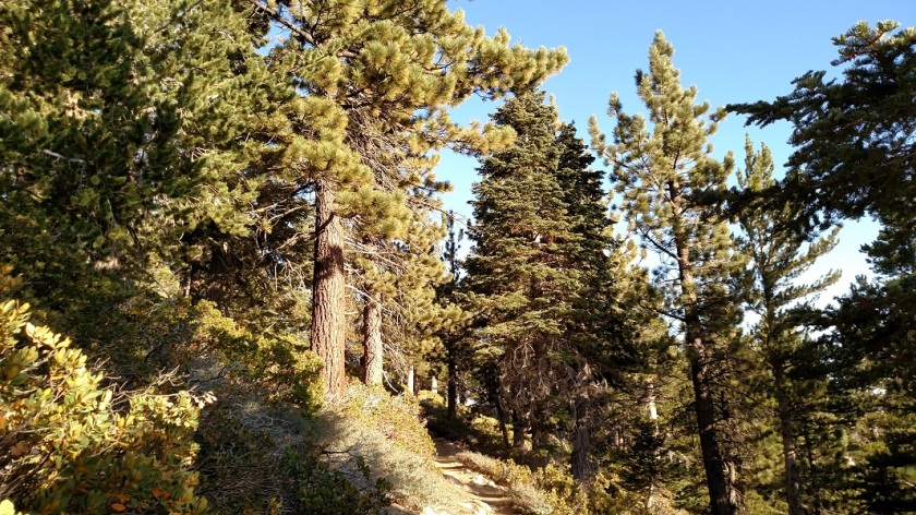 Vivian Creek Trail, San Gorgonio Mountain, CA