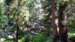 Vivian Creek Trail Camp, San Gorgonio Mountain, CA