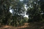 San Marcos Foothills Nature Preserve, Santa Barbara, CA
