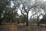 San Maros Foothills Nature Preserve, Santa Barbara, CA