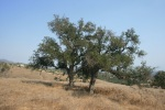 San Marcos Foothills Nature Preserve