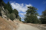 Mt. Disappointment Service Road, Angeles National Forest