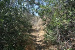 Cactus Trail, Irvine Regional Park