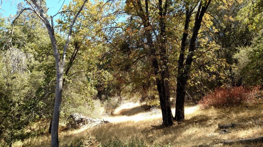 Webster Trail, Idyllwild, CA