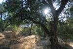 Fern Canyon Trail, Griffith Park