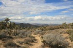 Burnt Hill Trail, Joshua Tree National Park
