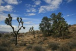Burnt Hill Trail, Joshua Tree National Park