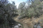 Eureka Peak Trail, Joshua Tree National Park