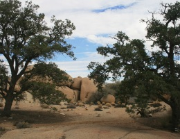 Pine City, Joshua Tree National Park