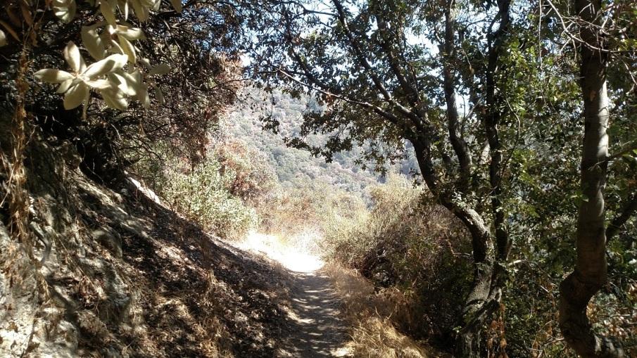 Mt. Wilson Trail, San Gabriel Mountains, CA
