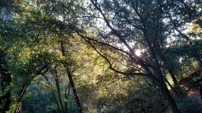 Mt. Wilson Trail, Sierra Madre, CA