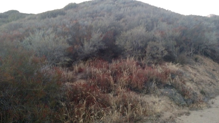 Sawmill Mountain, Angeles National Forest