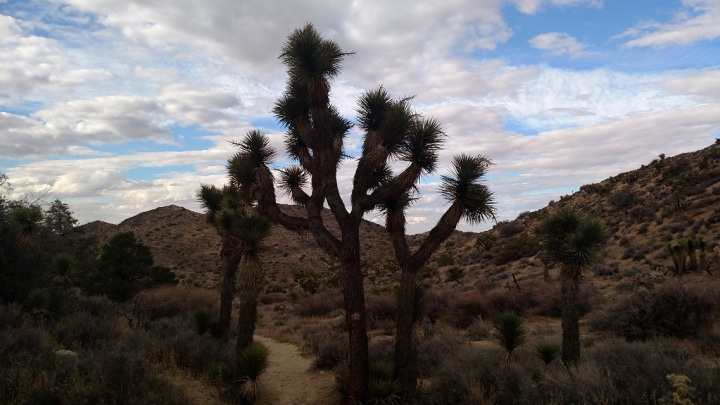 Joshua Tree National Park, High View Nature Trail