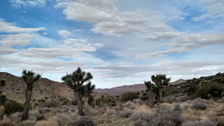 High View Nature Trail, Joshua Tree National Park