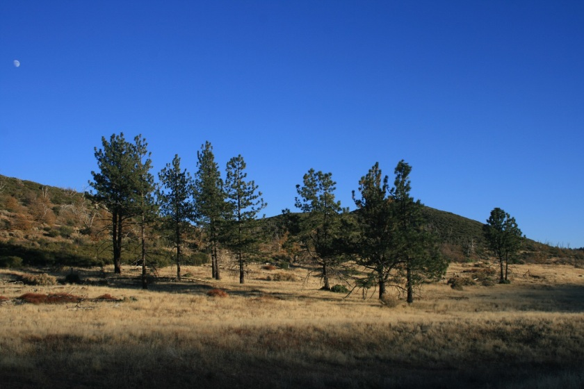 Pine Mountain, Cleveland National Forest, CA
