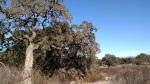 Sage Trail, Escondido, CA