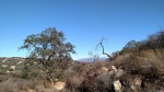Sage Trail, Daley Ranch, Escondido, CA