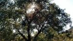 Caballo Trail, Escondido, CA