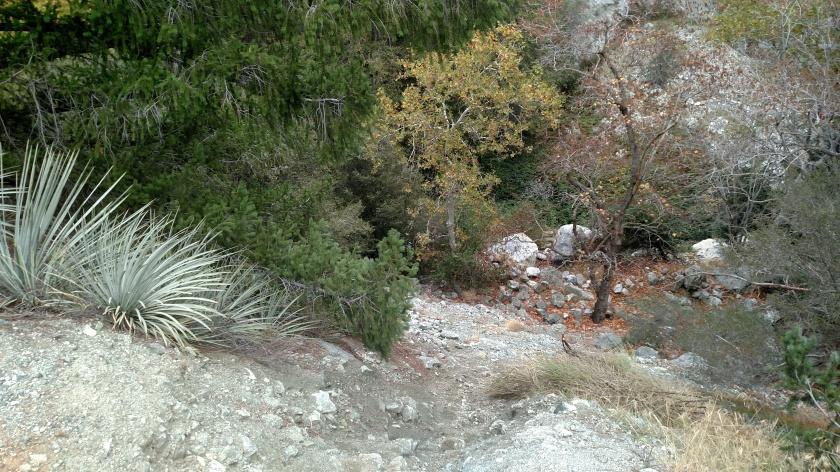 Stoddard Canyon, Mt. Baldy, CA