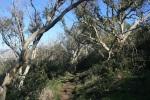 Apsley Trail, Palos Verdes Peninsula, CA