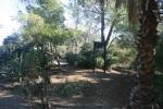 Marian Harlow Grove, Elysian Park, Los Angeles