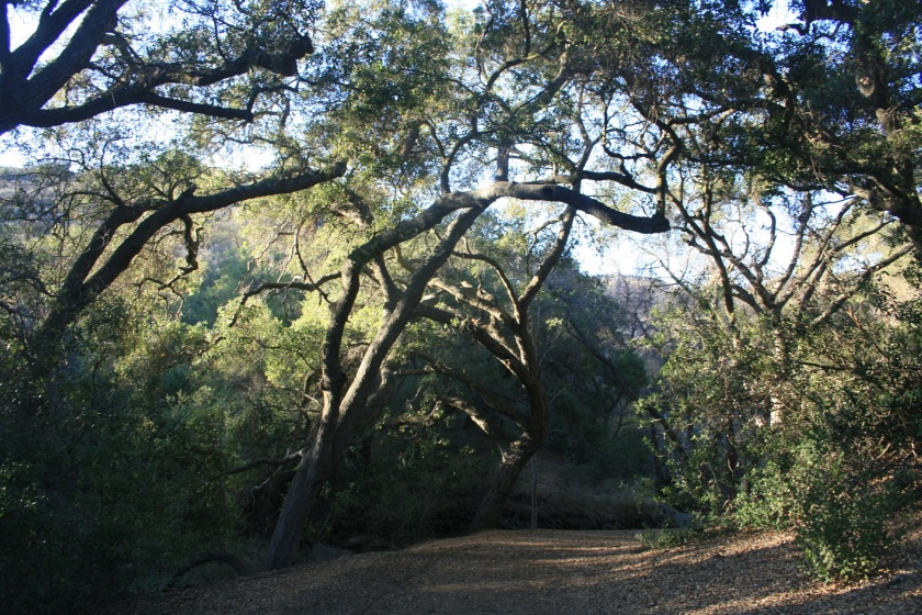 Las Flores Trail, Thousand Oaks, CA