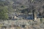 Pacific Crest Trail, Boulder Oaks, CA