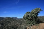 Pacific Crest Trail, San Diego County, CA
