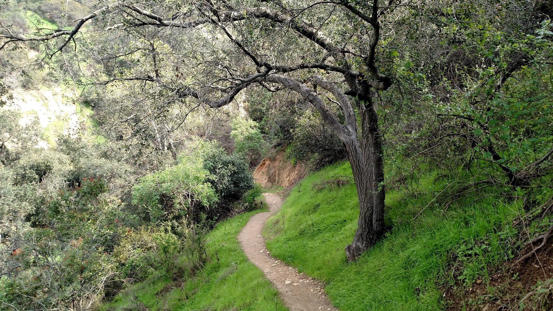 Catalina Verdugo Trail, Glendale, CA