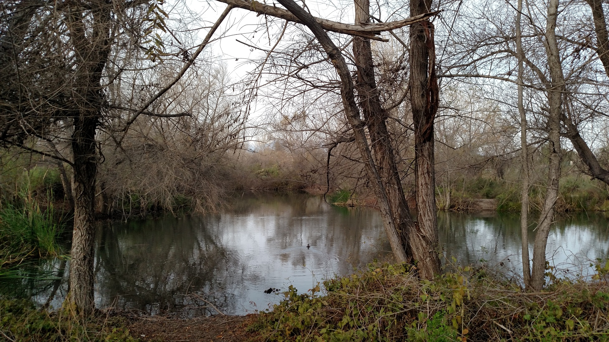Chino Creek Wetlands