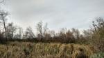 Chino Creek Wetlands, Chino, CA