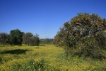 Northwest Open Space, San Juan Capistrano, CA