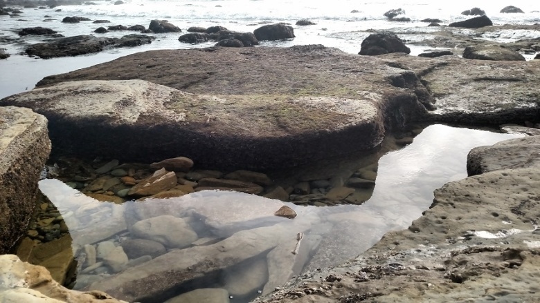 Tide pools, Cabrillo National Monument